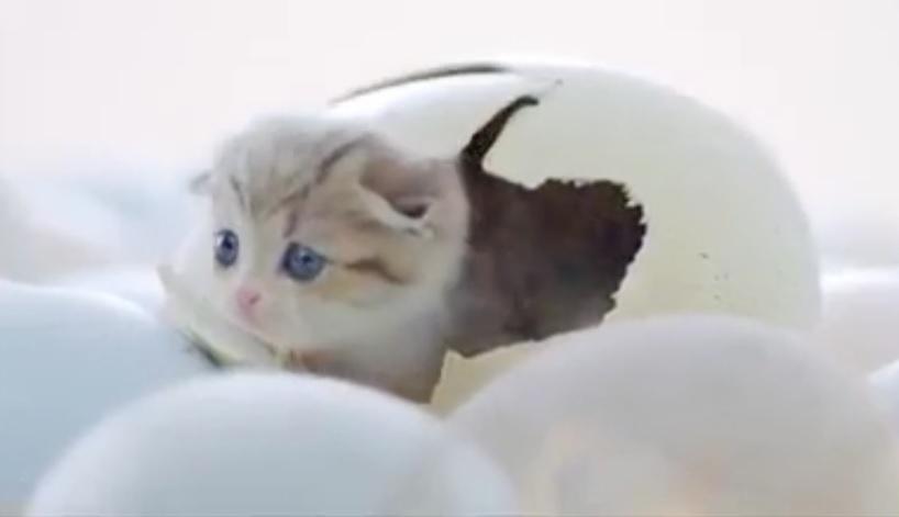 卵からネコ