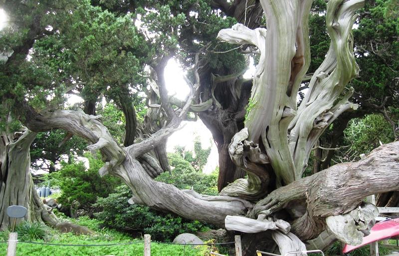 大瀬神社,木