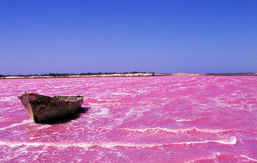 ピンクの湖,ラックローズ